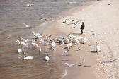 Swans on the beach — Stock Photo