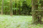 Kornik Arboretum — Zdjęcie stockowe