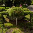 Topiary wire cage. — Stock fotografie #16779555