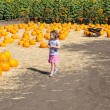Pumpkin Patch — Stock Photo #17598271