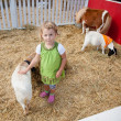 Petting zoo — Stock Photo