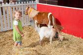 Dětské zoo — Stock fotografie