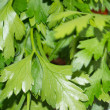 Garden parsley — Stock Photo
