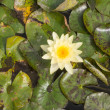 Yellow water lily — Stock Photo #36973421