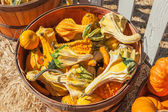 Autumn Wings Gourds — Stock Photo
