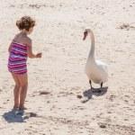Mute Swan — Stock Photo #40541679