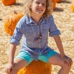 Pumpkin Patch — Stock Photo #40843681