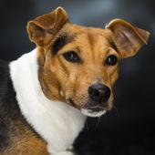 Charismatic dog — Stock Photo