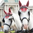 Two horses with harness - Stock Photo