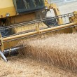 Combine harvesting cereals field — Stock Photo
