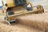 Combine harvesting cereals field — Stock Photo