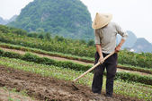 Chinese peasant working in field — Stock Photo
