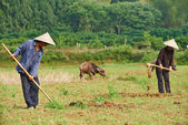 Chinese agricultural farm workers — Stock Photo
