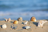 Sea shells on beach — Stock Photo