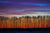 Atardecer atardecer temprano en bosque. paisaje — Foto de Stock