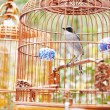 Bird in cage — Stock Photo #36599589