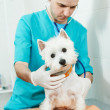 Veterinarian surgeon treating dog — Stock Photo