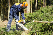 Lumberjack cutting tree in forest — Stock Photo