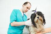 Veterinarian surgeon treating dog — Stock Photo