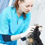 Veterinarian surgeon treating dog — Stock Photo #46980587