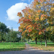 Park in autumn season with yellow, orange foliage — Stock Photo #14902829