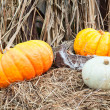 Several yellow pumpkins laying in hay — Stock Photo #14903051