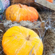 Yellow and orange ripe pumpkins ready for storage — Stock Photo