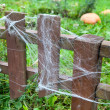 Lot of web on wooden fence in garden and ripe pumpkins on green grass — Stock Photo #14903301