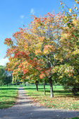 Park in autumn season with colorful foliage — Stock Photo