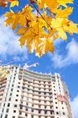 Wieżowiec w konstrukcji i żółty klonów na brunch. skupić się na liści — Zdjęcie stockowe