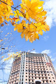 High-rise building under construction and yellow maples on brunch. Focus on skyskraper — Stock Photo