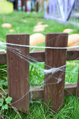 Wooden fence with web on planks and growing pumpkins on earth — Stock Photo