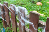 Wooden planks of fence with web in garden — Stock Photo