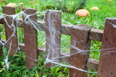 A lot of web on wooden fence in garden and ripe pumpkins on green grass — Stock Photo
