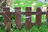 Wooden fence with web on planks and growing pumpkins on green grass — Stock Photo