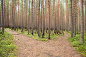 Growing forest after fire — Stock Photo