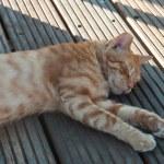 Sleeping Street Cat — Stock Photo #23318234