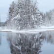 Snow-covered trees on lake — Stock Photo