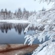 Snow-covered branches on lake — Stock Photo