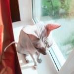Cat on window sill — Stock Photo #49931881