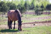 Horse feeding — Stock Photo