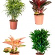 Set of indoor plants — Stock Photo #14394397
