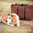 Dog with Sunglasses and Old Fashioned Suitcase — Stock Photo #12576967