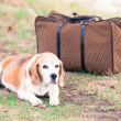 Dog next to an Old Suitcase — Stock Photo