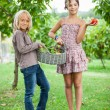 Stock Photo: Boy and Girl Holding Basket of Vegetables