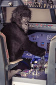 Gorilla Piloting an Airplane — Stock Photo