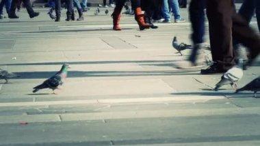 People Walking, Piazza Duomo, Milan — Stock Video