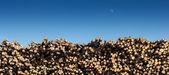Hout onder de blauwe hemel — Stockfoto