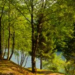 Stock Photo: Wooded Shore