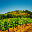 Chianti — Stock Photo #12182331